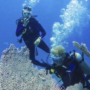 Diving at Catalina Island