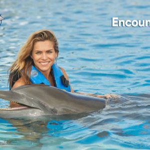 Dolphins Discovery – Dolphin Encounter