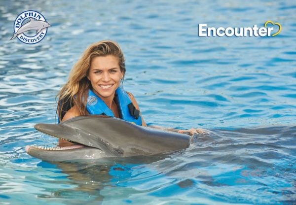 Dolphins Discovery