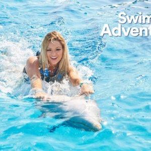 Dolphin Discovery-Dolphin Swim Adventure