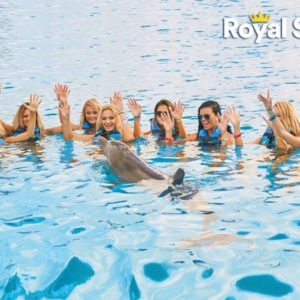 Dolphins Discovery-Royal Swim